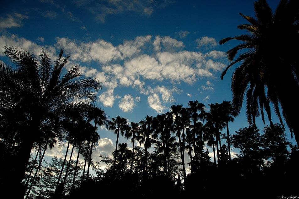 ... und der Himmel hängt voller Palmen