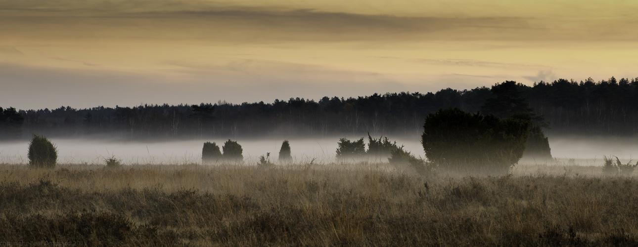 """""""und der Nebel kriecht"""""""