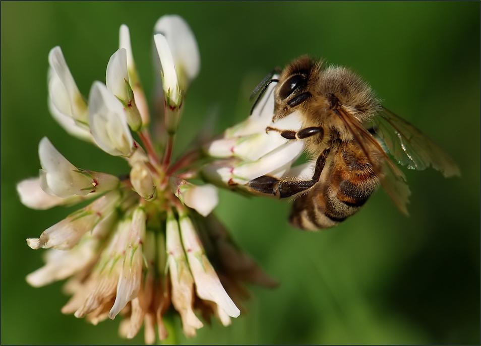 ...und diese Biene .......