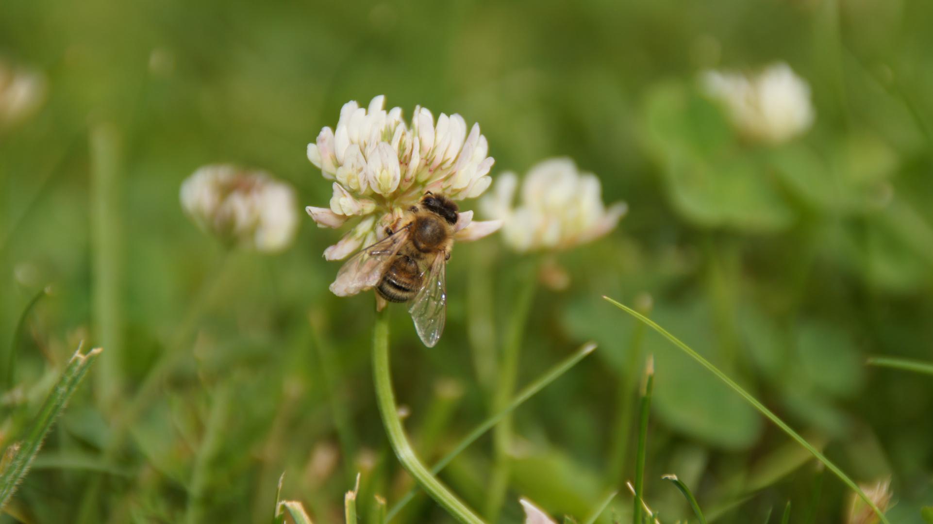 und diese Biene die ich meine nennt sich Maja....
