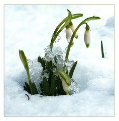 Und dräut der Winter noch so sehr...