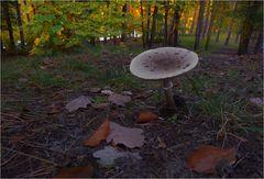 Und ein einsamer Pilz ...