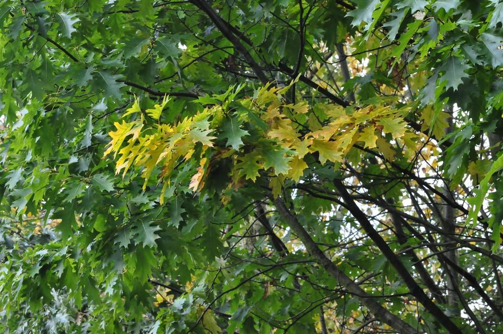 und er kommt doch....................... der Herbst