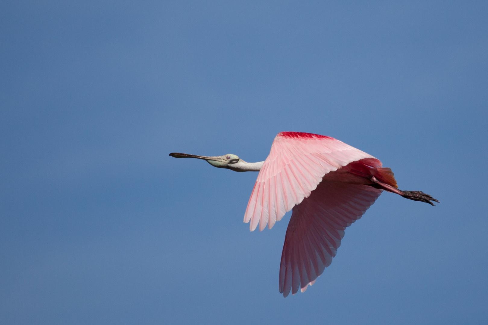 Und es erhebt sich der Vogel ...