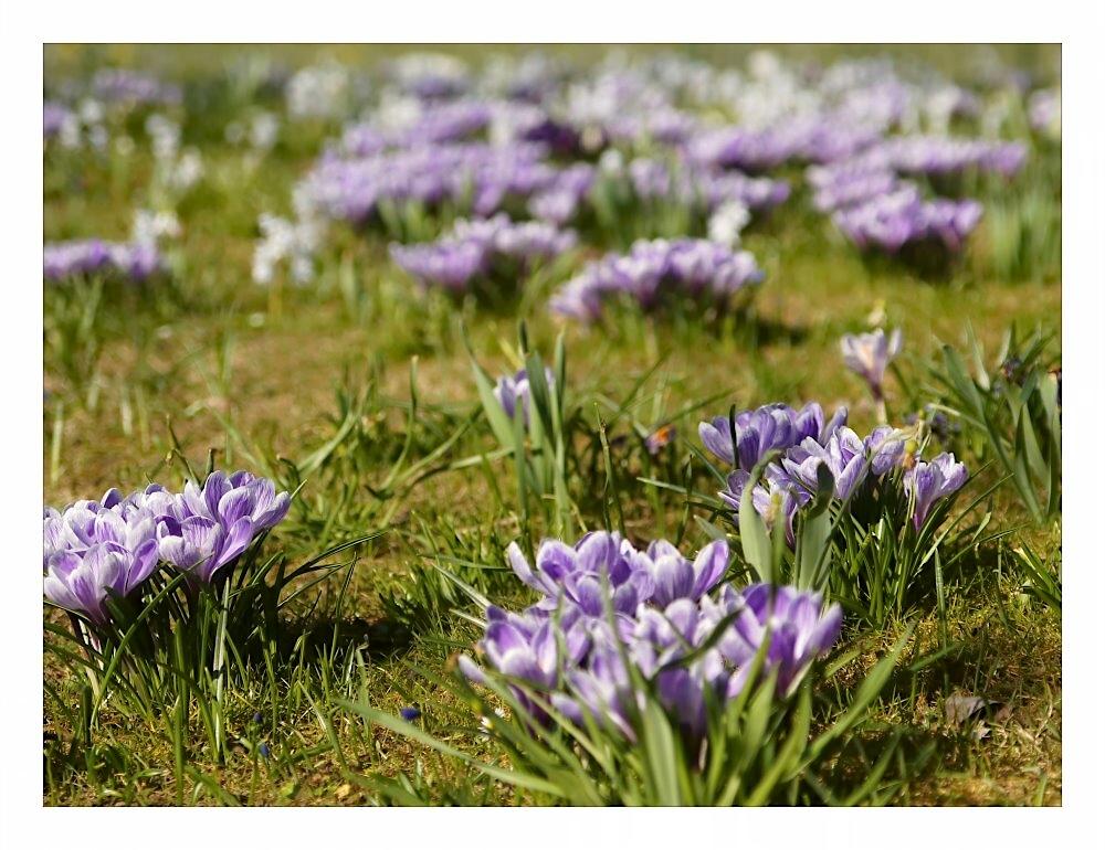 Und es gibt doch einen Frühling...
