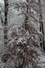 und es schneit und schneit