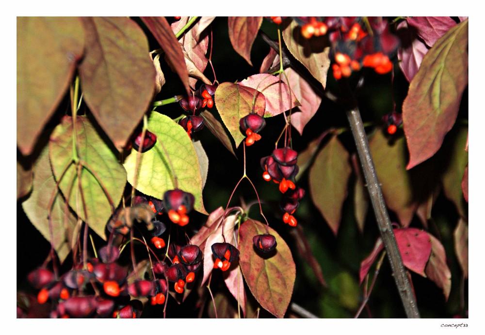 und es wird Herbst