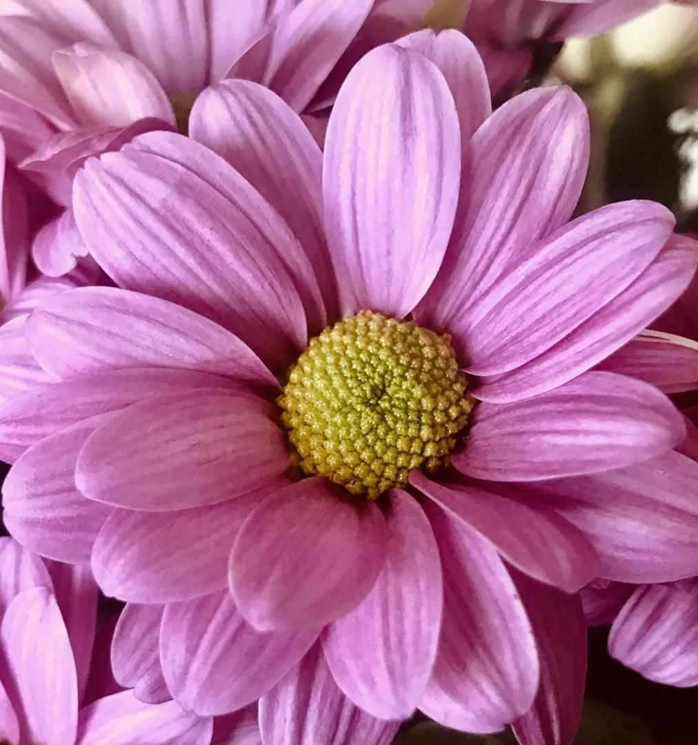 und hier eine schöne Mittwochs Blume