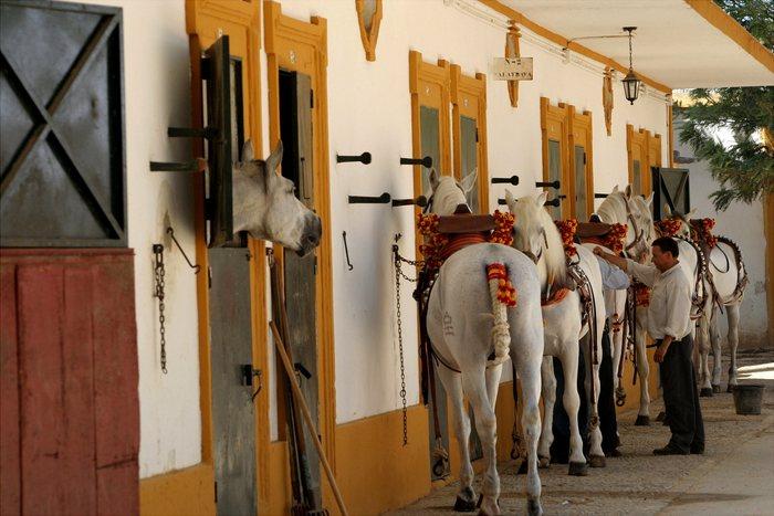 und hier warten die Pferde aufs Anspannen....ebenfalls Heeresgestüt in Jerez