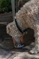 ..... und Hunde mögen auch Eis.......