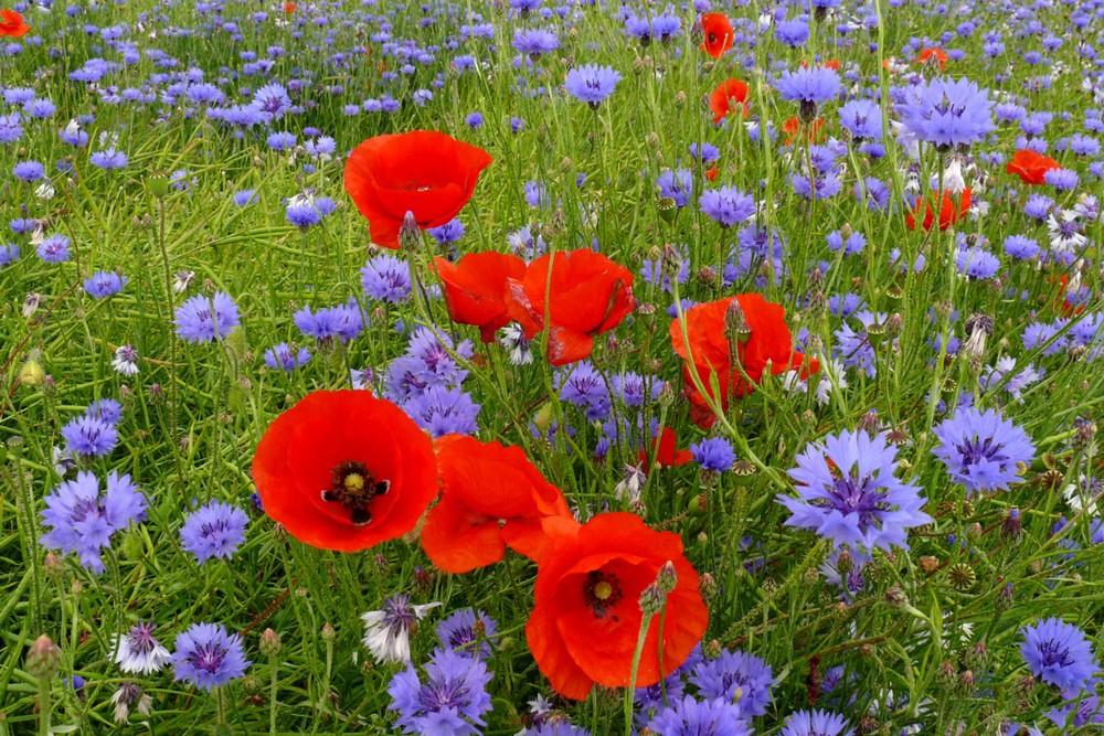 Und immer wieder diese Blumenpracht ...