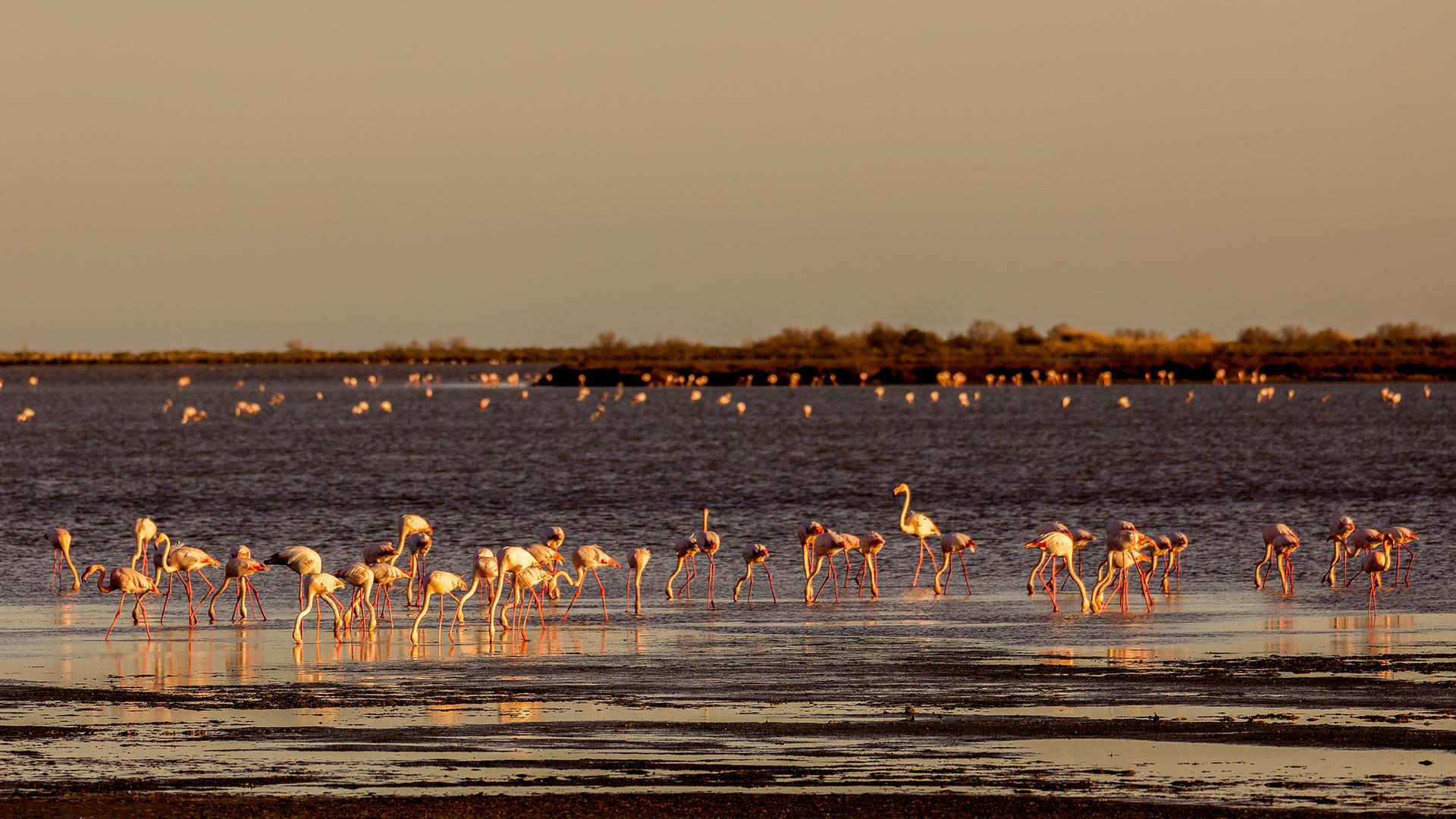 ...und immer wieder Flamingos (II)