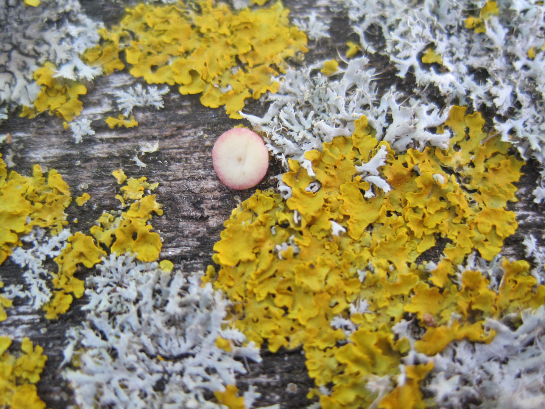 Und in der Mitte war der Pilz....