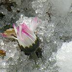 Und ist es noch so kalt, der Frühling kommt doch bald