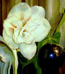 und jetzt blüht auch die weisse Amaryllis 2 auf der Fensterbank
