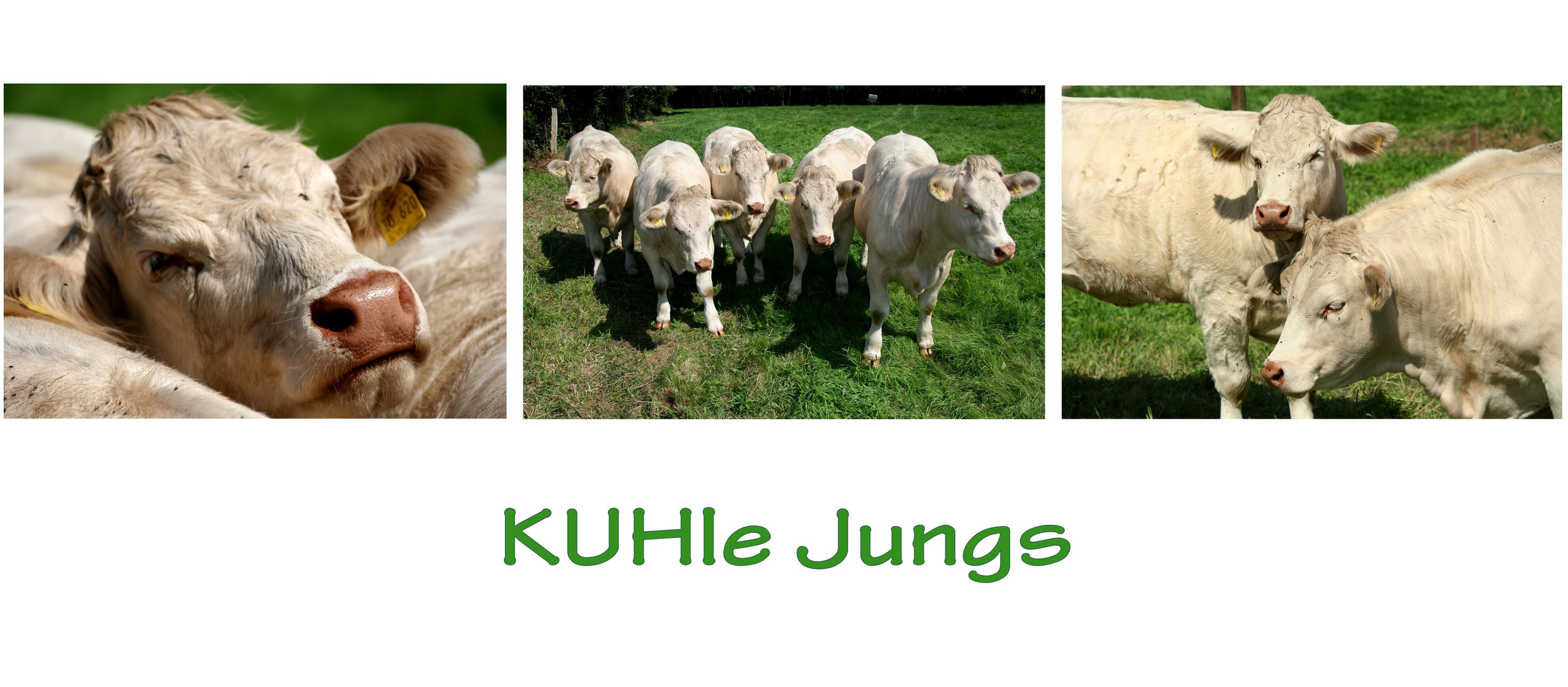 ... und KUHle Jungs