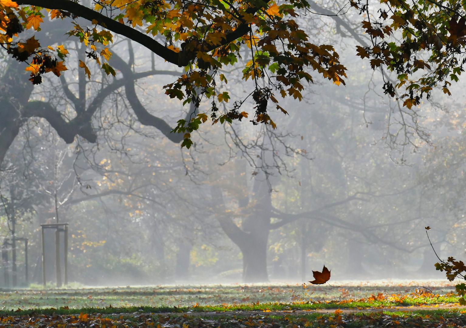 ... und leise fallen die Blätter