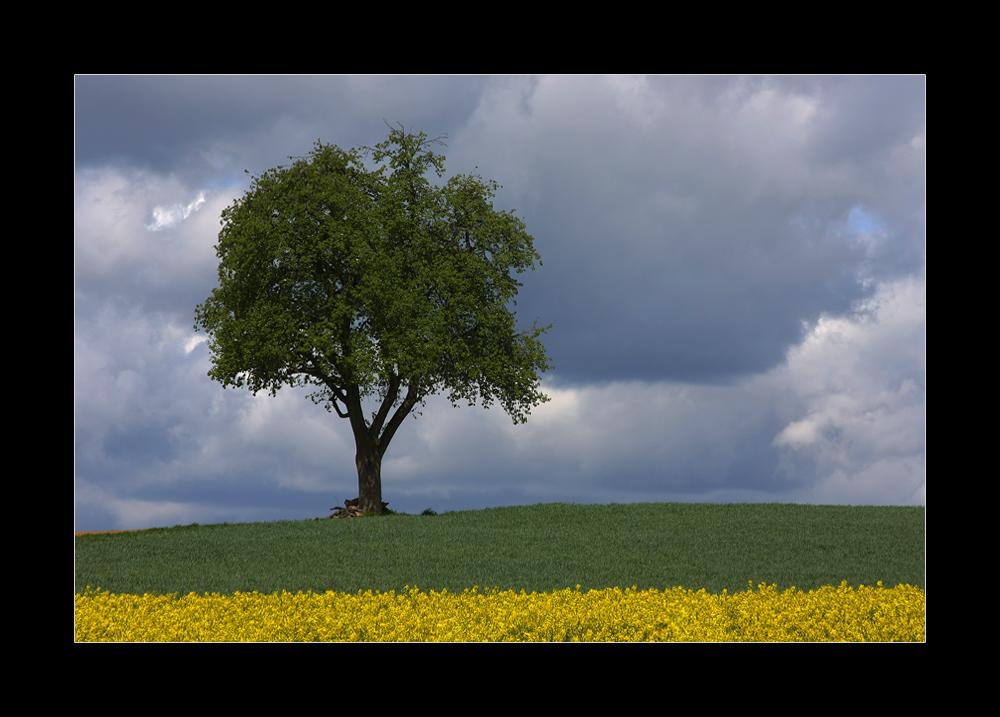 und noch ein Baum