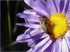 Und noch ein Bienchen......