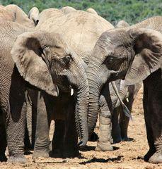 ... und noch ein Elefantenbild