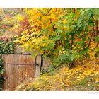 Und noch ein Herbstfoto