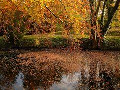 ...und noch ein letztes Herbstbild