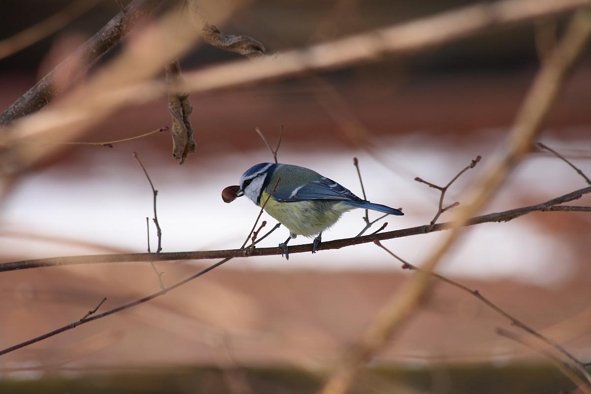 ... und noch ein Vogel