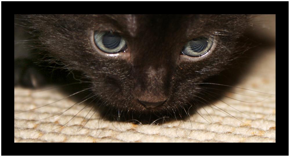 Und noch eine BIBI Katze