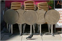 Und noch eine einsame Taube