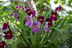 Und noch eine Orchidee aus der Biosphäre Potsdam