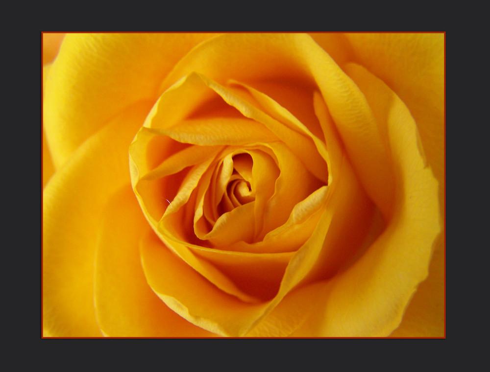 ...Und noch eine Rose...