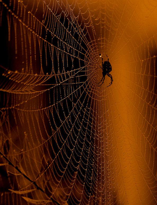 Und noch eine Spinnennetz - Filterspielerei ... vom Archiv !