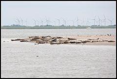 Und noch einer: Robben und viel Wind um nichts