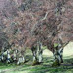 und noch einmal die tanzenden Bäume....