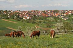 Und noch einmal Sicht von Altenriet aus nach Schlaitdorf