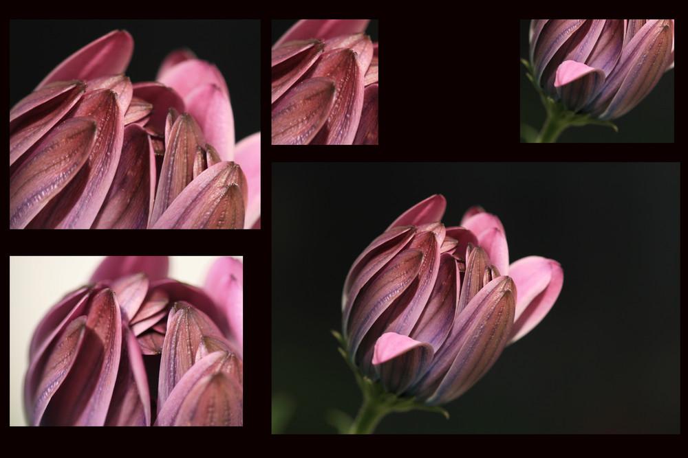 und noch einmal traut sich eine Blüte ans Licht.....