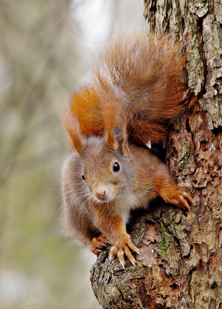 und noch eins  ein eichhörnchen am baum foto  bild