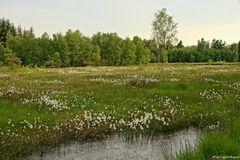 Und noch mal das Duvenstedter Moor
