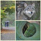 ..und nochmal Tierpark vom 17.10.