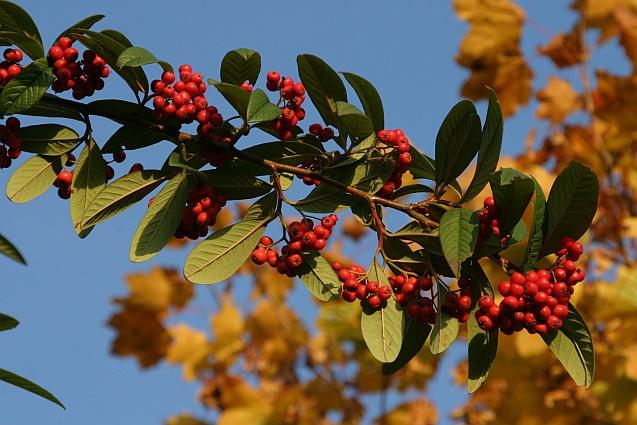 Und nochmals Herbstfarben oder Herbstfrüchte oder so..