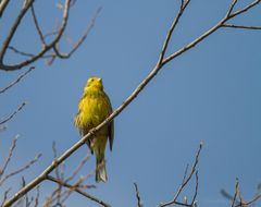 Und nun das Singvogelwetter..