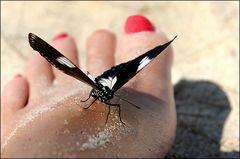 Und plötzlich landete der Schmetterling auf meinem Fuss...