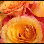 Und Rosen für den beginnenden Tag