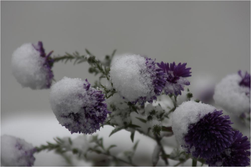 ... und Schnee