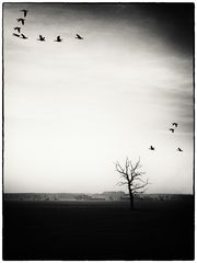 und sie fliegen