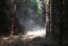 Und sie gerieten immer tiefer in einen finsteren Wald....