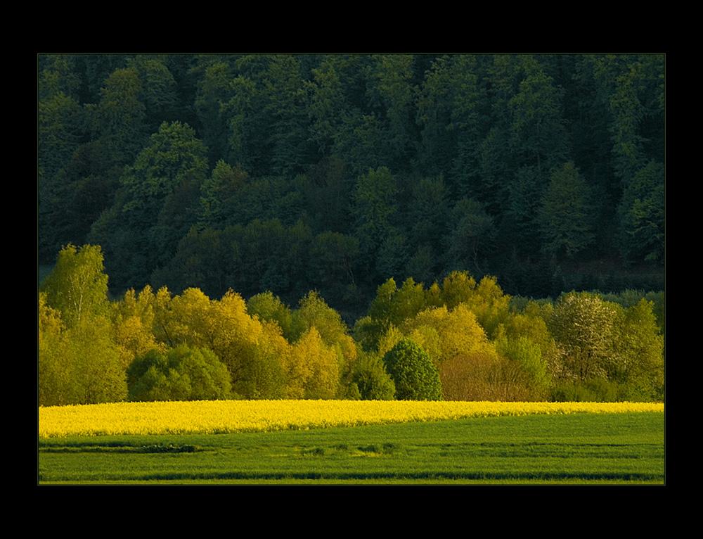 ...und still und ernst ruht der Wald...
