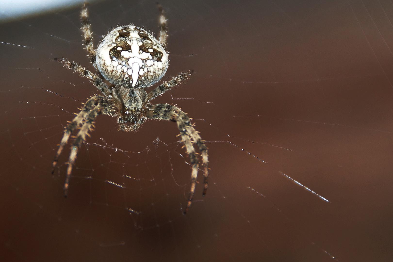 Und täglich grüßt die freundliche Spinne aus der Nachbarschaft ...