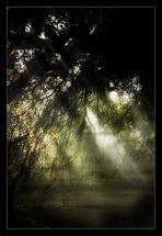 Und wenn der Nebel vergehen wird......