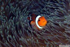 ... und wenn es keine Nemos gäbe...